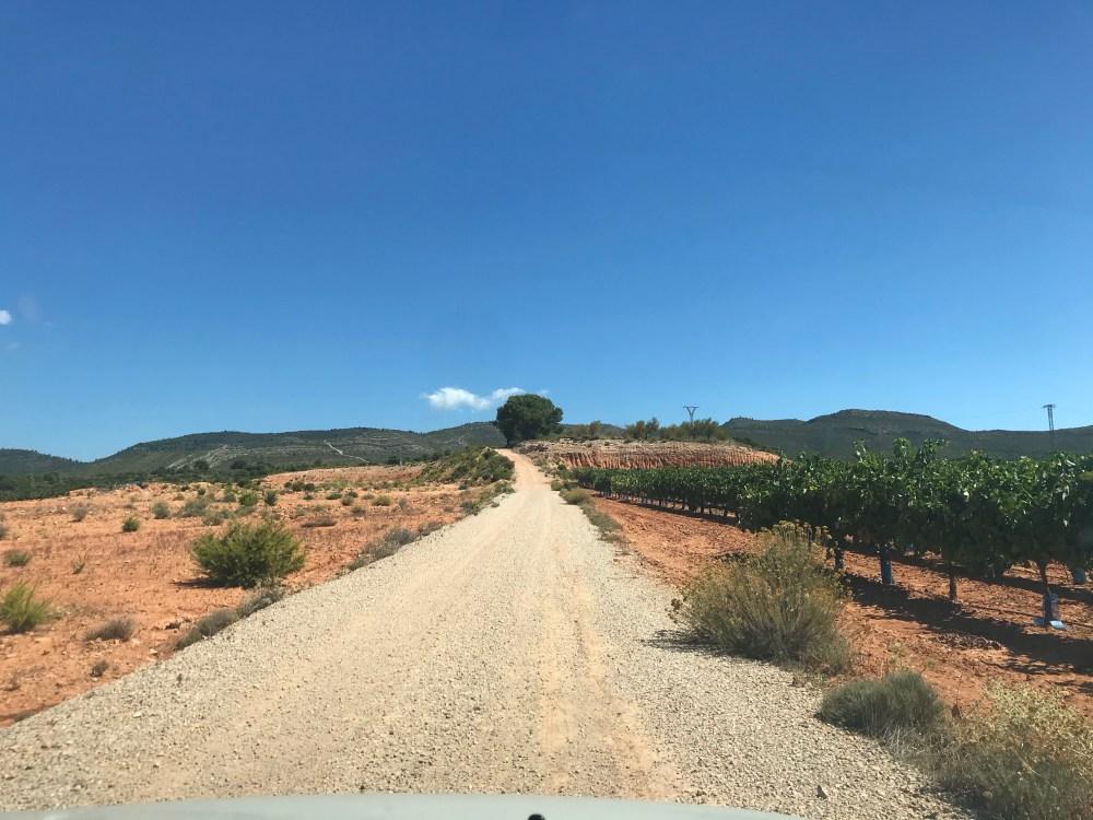 A estrada repleta de oliveiras na da rota do azeite em Requena-Utiel na Espanha