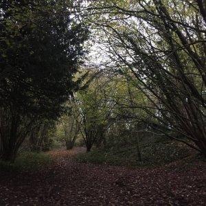 Leighs Wood, Bristol