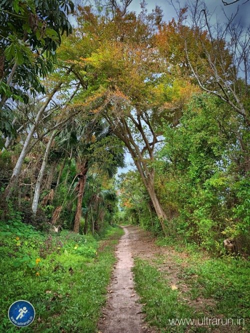 Running Bermuda Trails