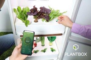 Plant-Box-UV