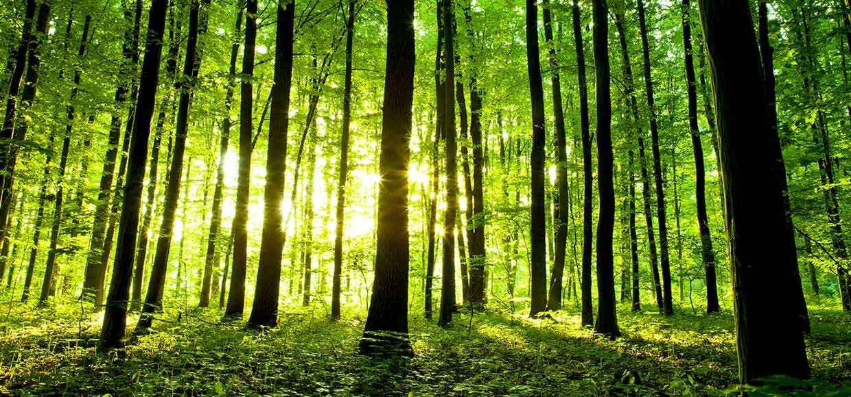bosques-UV