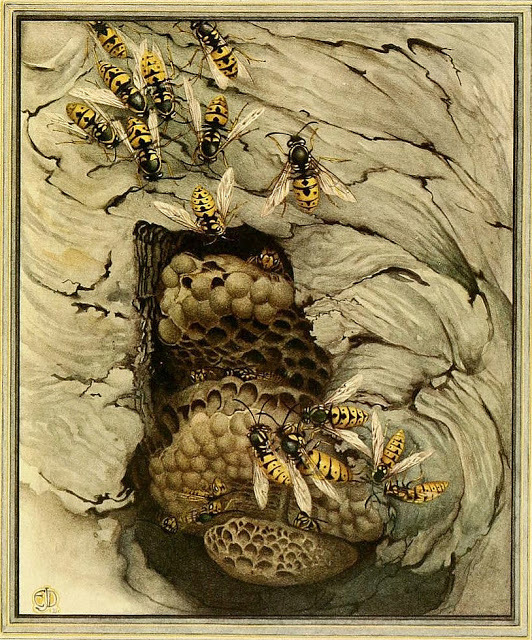 Wasps by Edward Julius Detmold