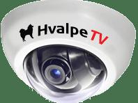 HvalpeTV2