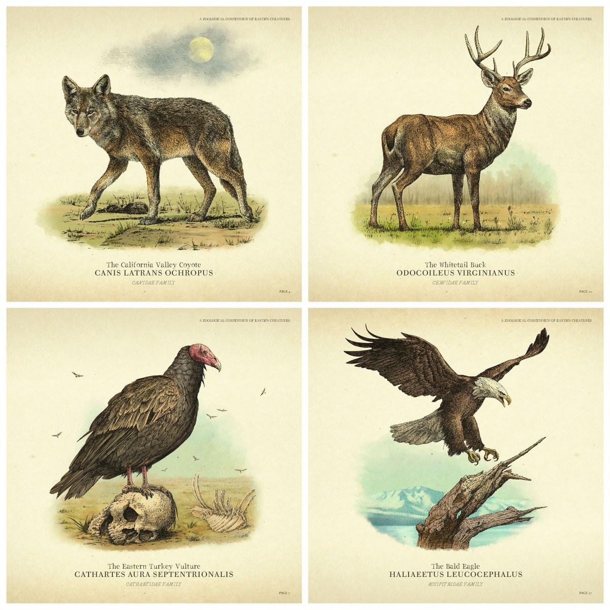 rdr2 wildlife.jpg
