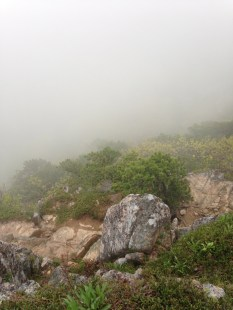 Foggy View from Beehive Trail
