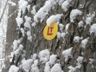 A Loyalsock Trail Blaze