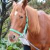 沖縄の牧場で求人です。仕事は厩務員としての仕事と、多少の園芸作業があります。
