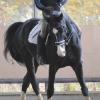 若い馬や選手の育成を目的とした競技専門厩舎