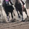 馬好きの若いスタッフが多く、アットホームな環境です。