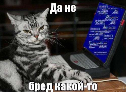кот за ноутом