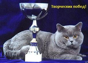 кот и приз