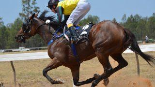 現役獣医師による2017年シルクHC募集馬評価 ⑤総合評価