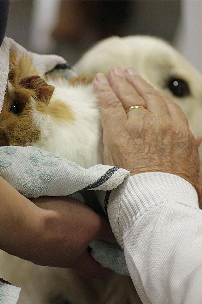 La formation de spécialisation à la médiation animale enseigne la triangulaire patient/intervenant/animal