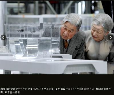 増養殖研究所でウナギの仔魚(しぎょ)を見る天皇、皇后両陛下=25日午前11時10分、静岡県南伊豆町、飯塚晋一撮影