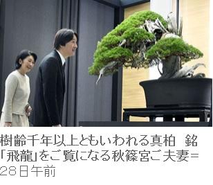盆栽を鑑賞される秋篠宮両殿下
