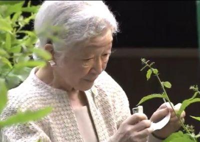 皇后さま 毎年恒例の養蚕作業「山つけ」その2