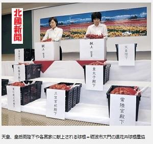 皇室に献上、球根箱詰め チューリップ6品種4千個