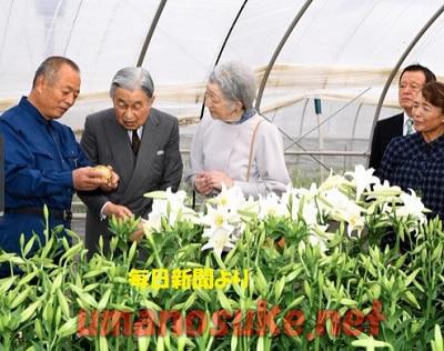 天皇皇后ユリ農家訪問 沖永良部島