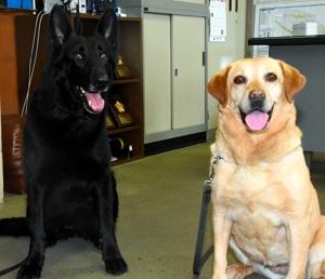 表彰を受けたアリス号(左)とリン号=伊勢原署