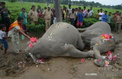 象が感電死した