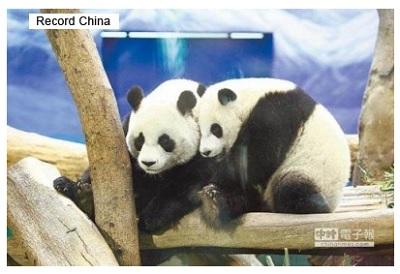 台湾のパンダ