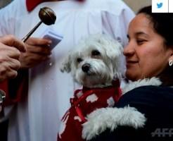 聖職者から祝福を受ける犬