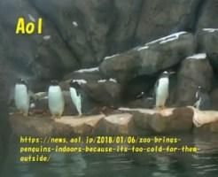 カナダ大寒波で屋内プールにいるペンギンたち