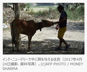 インド刑務所で牛セラピー導入