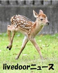 奈良公園で今年初のシカの赤ちゃん誕生