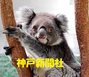 22歳で老衰したコアラ
