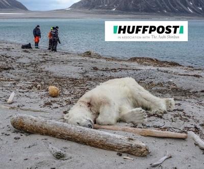 銃殺された野生の白クマ