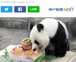 ご長寿パンダ王子動物園