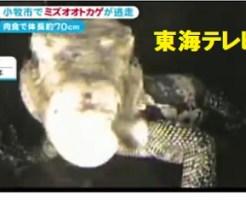 2006年に逃げ出したミズオオトカゲ