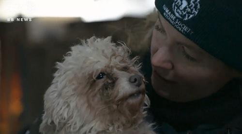 救出された韓国の食肉場から救われた犬