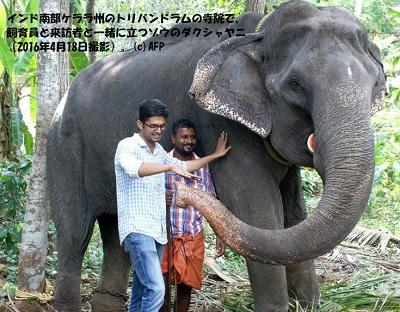 88歳で大往生したインド象