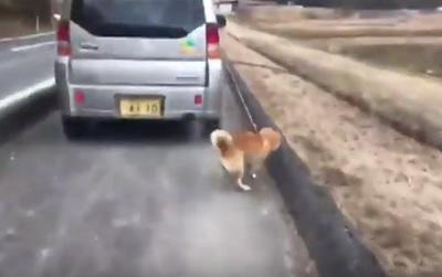 車で犬を散歩