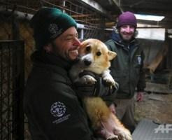 韓国の食肉場から救われたかわいい犬