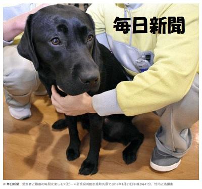 受刑者が育てたパピー6頭、盲導犬協会に引き渡し
