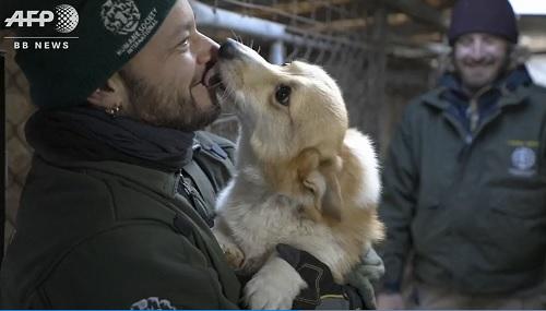 韓国の食肉場から救われた犬