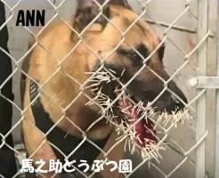 ヤマアラシに攻撃された警察犬