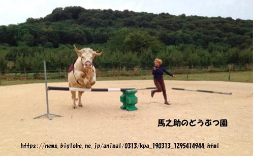 馬になった食肉牛