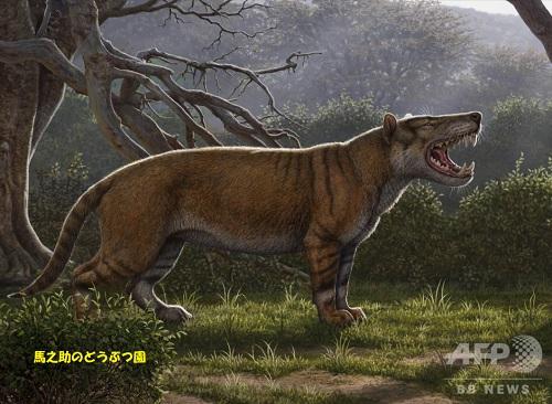 2000万年以上前のアフリカに生息していた超大型の肉食哺乳類「シンバクブワ・クトカアフリカ」の想像図