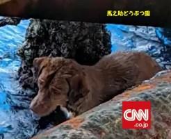 タイ沖220キロで泳ぐ犬を救助