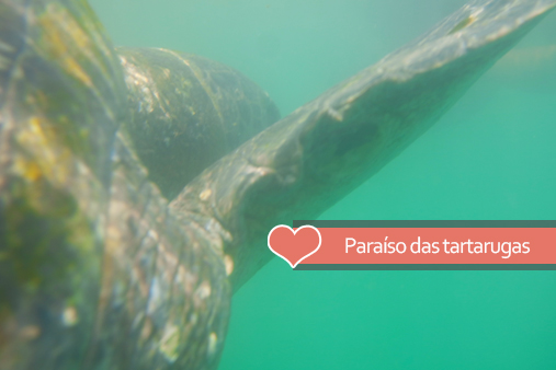Nadando com as tartarugas - Como chegar em El Ñuro por conta a partir de Máncora