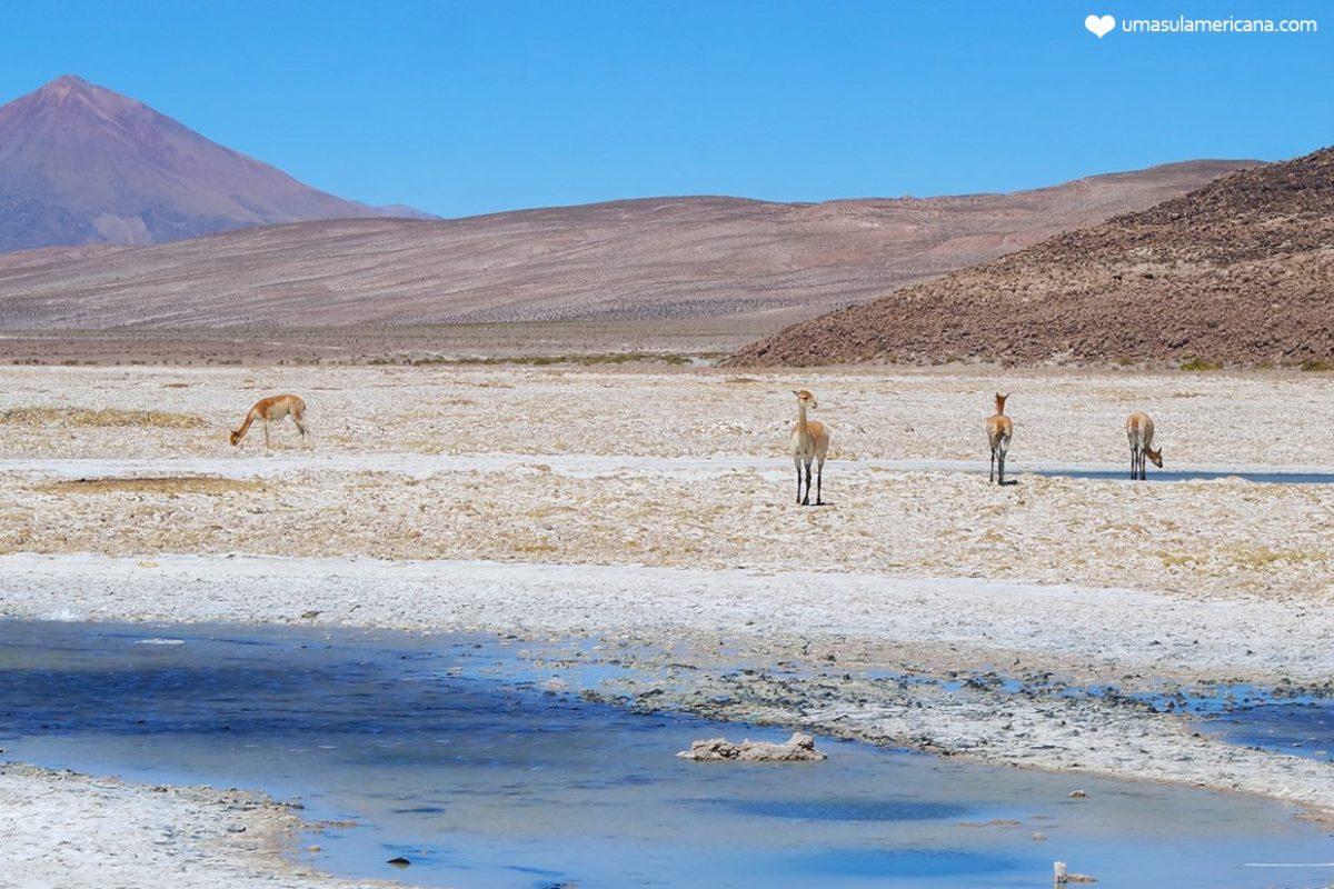 Salar de Uyuni - Bolívia - Tudo o que você precisa saber sobre o passeio
