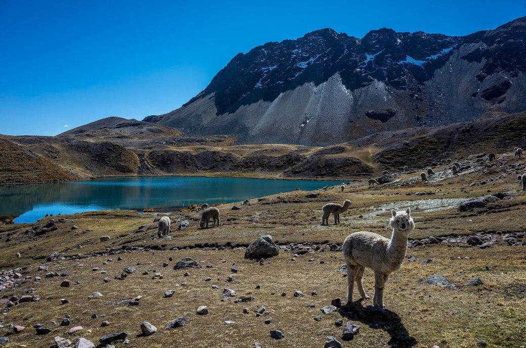 Trekkings no Peru - Circuito Ausangate, na região de Cusco