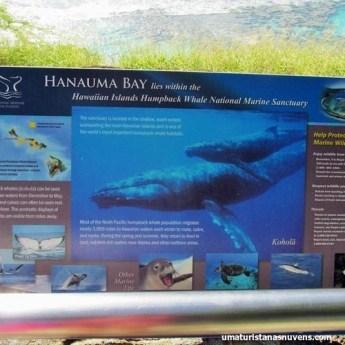 Hanauma Bay no Havaí - Oahu1