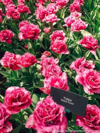 Como visitar o Keukenhof - parque de flores na Holanda1
