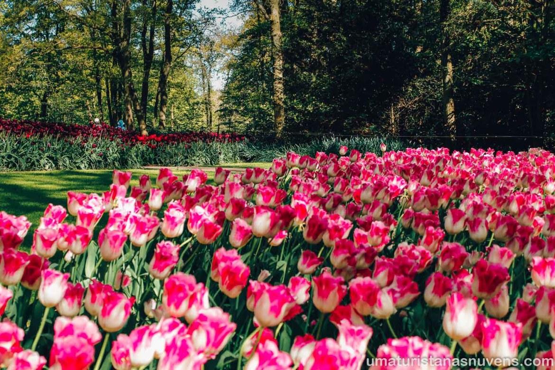 flores no Keukenhof, o maior parque de tulipas do mundo - Holanda