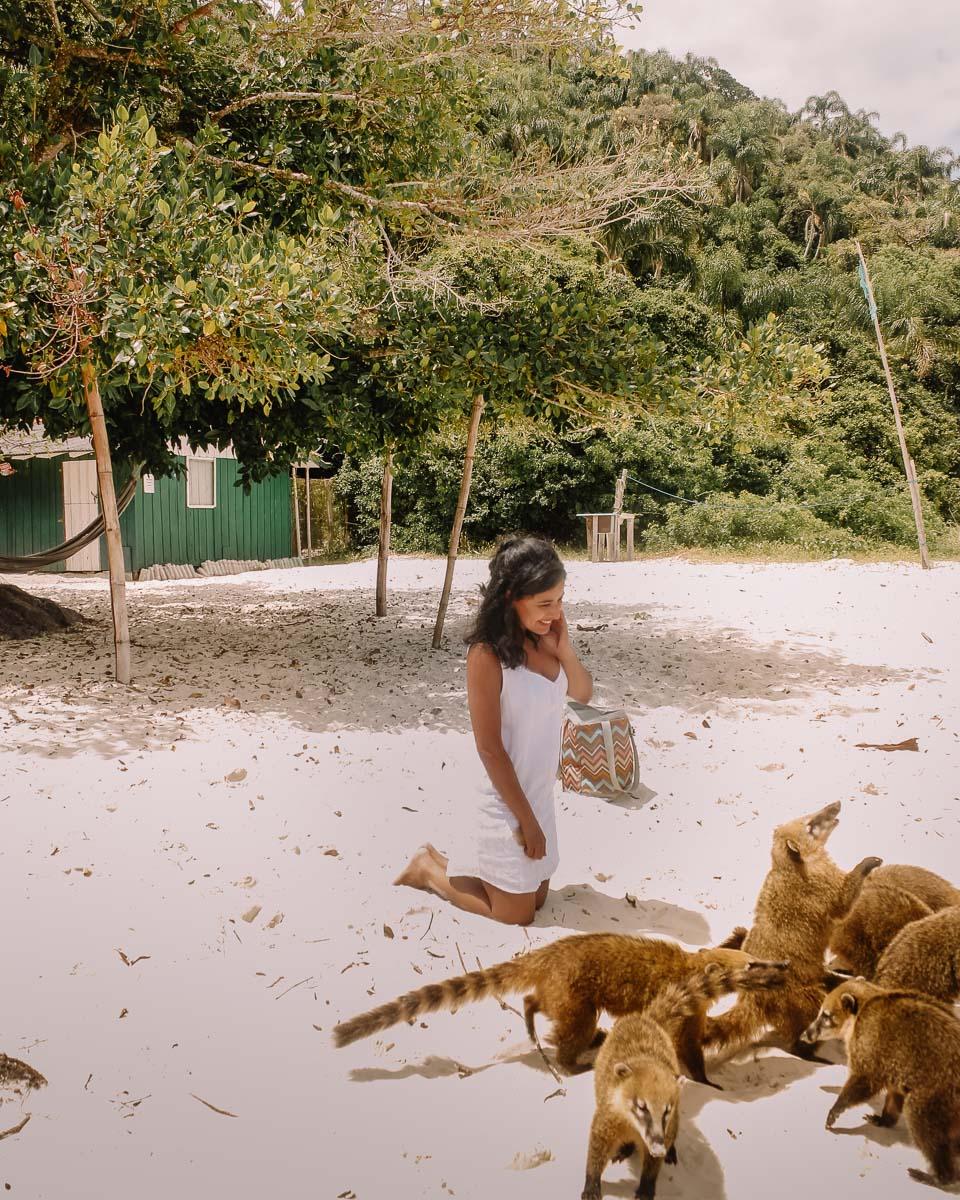 O que fazer em Florianópolis - roteiro - Ilha do Campeche - quatis